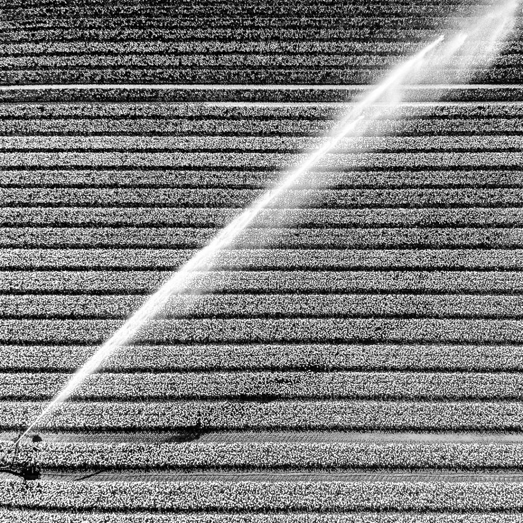 Fotograaf dam-Volendam, fotograaf Edam, Fotograaf Vollendam,Fotograaf Zeevang, Fotograaf Beemster, Tulpenvelden, Tulpenveld, Beregening tulpen